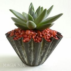 Magia Mia: Pachyveria Succulent in antique fluted tin. I've been wanting to use this fabulous fluted tin, because I love the great depth it has for its smallish size. I wanted to accentuate the fluted detail, so I knew contrasting gravel was just the ticket!  @jmg202 #Echeveria #Pachyveria #Succulents #CreativeGardening #Planters