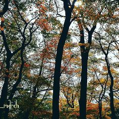 【lucola_march_】さんのInstagramの写真をピンしています。《* #紅葉 #森 城巡りで山城に行った時のです🏯 戦があったとは思えないくらい綺麗でした😊 ただ🐻🐗に要注意ωω * 📆201511下旬 * #林 #晩秋 #秋 #秋空 #小谷城 #誰かに見せたい風景 #autumn #Shiga #NikonD5200 #wu_japan #team_jp_#team_jp_東#icu_japan#Lovers_Nippon#IGersJP#jp_gallery#wp_japan#PHOS_JAPAN#bestjapanpics#カメラのキタムラ#東京カメラ部 #9Vaga9#team_jp_flower#lovely_flowergarden#WP_flower#はなまっぷ》
