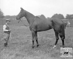 Rose Of England(1927)Teddy- Perce-Neige By Neil Gow. 4x5 To Bend Or, 5x5 To Hermit & Ormonde. Won 1930 Epsom Oaks. Her Sire Teddy Has 2 English Triple Crown Winners In First 4 Generations(Ormonde & Flying Fox).