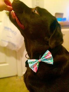 Match your puppy!! Lilly Pulitzer Dog Collar Bow- Detachable