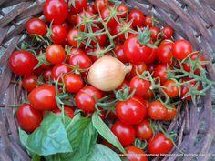 Tomates Cherry - Albahaca - Cebolla - http://sensacionesgastronomicas.blogspot.com.es/2014/09/huerto-ecologico-2014-parades-en.html