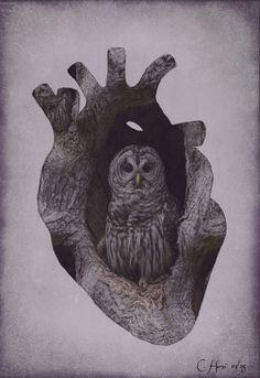 Owl in tree .