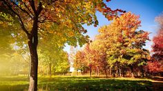 Widescreen, autumn, wallpaper, trees, background, mac (#220440)