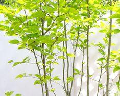 f:id:straycat10dog:20180530164600p:plain Patio Design, Exterior Design, Garden Design, Interior Window Trim, Green Garden, Green Flowers, Garden Paths, Wall Sconces, Flower Arrangements