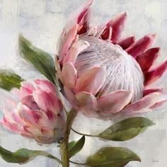 Protea Il is part of pencil-drawings - By Dezign furniture store in Sydney, with stores in Auburn and Artarmon Specialising in lounge furniture, living and dining room furniture, office furniture, bedroom furniture and homewares Protea Art, Protea Flower, Flower Oil, Oil Painting Flowers, Watercolor Flowers, Watercolor Art, Art Floral, African Flowers, Guache
