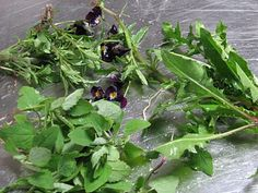 Lambsquarters, dandelion greens and violas...WHERE THE WILD THINGS ARE – Identifying Wild Edible Plants in Your Neck of the Woods
