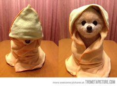 Young Assassin, hooded puppies, cuccioli, cappuccio, carini, cane, cani, dogs