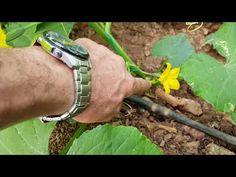 Fashion and Lifestyle Compost, House Plants, Farmer, Diy And Crafts, Make It Yourself, Green, Youtube, Drink, Lifestyle