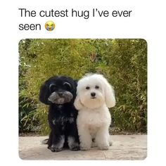 Cute Funny Dogs, Funny Cats And Dogs, Cute Funny Animals, Cute Baby Animals, Animals And Pets, Cute Cats, Cute Animal Memes, Cute Animal Videos, Funny Animal Pictures
