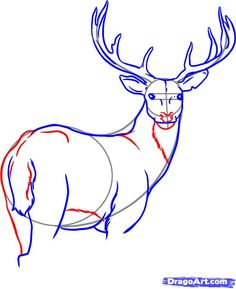 How to draw a buck...several tutorials!