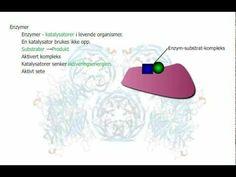 ENZYMER Enzymer er proteiner som virker som katalysatorer. Katalysatorer er stoffer som får kjemiske reaksjoner til å gå raskere uten selv å bli brukt opp i reaksjonen. BM: http://ndla.no/nb/node/3337?fag=7=872 NN: http://ndla.no/nn/node/22438?fag=7=186