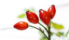 Šípek se sbírá od konce září do poloviny října. Plody mají léčivé účinky. Využít je můžeme vmnoha formách, například jako šípkový čaj, ocet, olej čivíno.