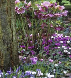 The easiest to grow bulbs for gently seeding themselves through shady spots in your garden.