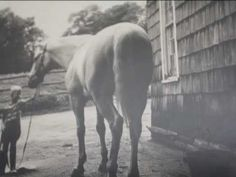 Clips of Snowman, a rescued plow horse, that became a show jumping champion. Learn more about Snowman in the New York Times bestselling book THE EIGHTY DOLLA. Most Beautiful Animals, Beautiful Horses, Snowman Horse, Horse Rescue, All The Pretty Horses, Show Jumping, Horse Love, Animals Of The World, Thoroughbred