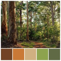 The beautiful Australian bush features a stunning tertiary colour palette of ora. Color Schemes Colour Palettes, Orange Color Palettes, Red Colour Palette, Green Color Schemes, Nature Color Palette, Hue Color, Forest Landscape, Green Landscape, Tertiary Color