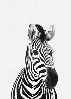 Zebra Portrait BWZebra portrait in black and white perfect for your home office or nursery decor High-quality metal poster designed by VividAtelier. Zebra Drawing, Zebra Painting, Zebra Art, Colorful Animal Paintings, Colorful Animals, Zebra Tattoos, Animal Tattoos, Africa Tattoos, Black And White Posters