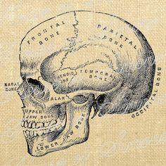 Halloween Skull Medical Oddities Vintage by HouseofSimoneArtDept, $1.25