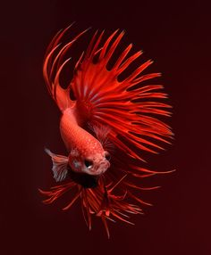 Double End Base, Germicidal UV Lamp (For Fish Pond, Aquarium, Nail Lamp etc. Pretty Fish, Beautiful Fish, Underwater Creatures, Ocean Creatures, Colorful Fish, Tropical Fish, Freshwater Aquarium, Aquarium Fish, Beautiful Creatures