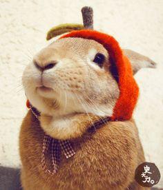 Num Num Num Num Num - LOL-worthy gifs of funny animals doing funny things Animals And Pets, Baby Animals, Funny Animals, Cute Animals, Benny And Joon, Gif Animé, Mundo Animal, Cute Bunny, Bunny Hat