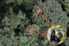 Drones for Good: Swooping in to Save the African Chimp | TakePart