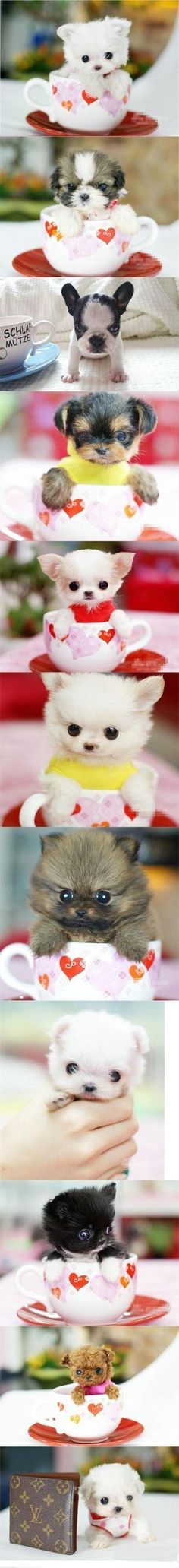 cute puppies, teacup puppies and kittens, they are real Tiny Puppies, Teacup Puppies, Cute Dogs And Puppies, Cutest Dogs, Doggies, Adorable Puppies, Cute Little Animals, Cute Funny Animals, Little Dogs