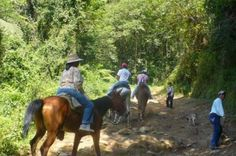 Ecoturismo Cañadas del Pixquiac Cabalgatas - Cabalgatas Acajete Veracruz