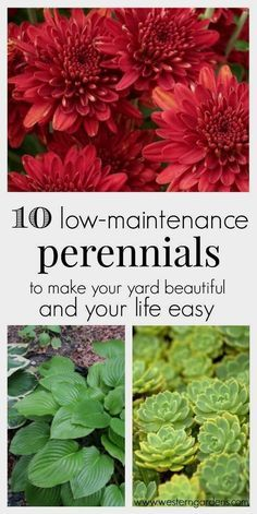 Love having a beautiful yard, but don't have a lot of time? You need these 10 low-maintanence perennials! They will make your yard beautiful and your life easier! #LandscapingIdeas