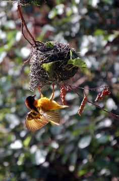**Tsavo birds (by Chester Zoo)