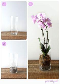 Cómo disponer la orquídea para que crezca sana.