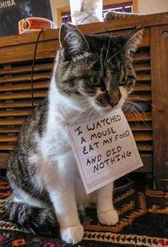 Nicht jede Katze ist eine Jägerin :-)