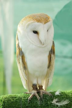 whoooo me? This owl is beautiful. I really dislike most birds but find owls simply gorgeous. Crazy huh?
