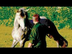 ▶ Klaus Hempfling - Collection a Stallion at Liberty