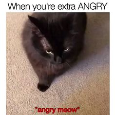 Cats memes hahaha - Laiba Khan Cats memes hahaha Source You are in the right place about grumpy cat Grumpy Cat Quotes, Funny Grumpy Cat Memes, Funny Animal Jokes, Funny Cute Cats, Funny Cat Videos, Dog Memes, Cute Funny Animals, Funny Animal Pictures, Cute Baby Animals