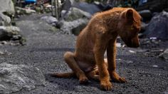 Rescue Service for strays