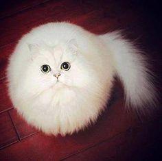 Ball of fluff :)