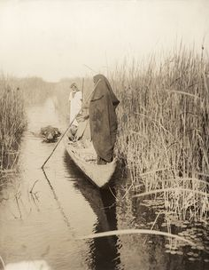 Men pole through reedy marshes of a lower Tigris and Euphrates plain. Iraq