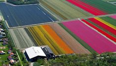 With the help of pilot Claython Pender, French photographer Normann Szkop took to the skies in a Cesna to capture the blooming tulip fields in Anna Paulowna, a town in North Holland. Dutch Tulip, Tulip Fields, I Amsterdam, French Photographers, Bulb Flowers, Aerial Photography, Daffodils, Kayaking, Netherlands