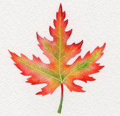 SILVER MAPLE leaf watercolor painting -- Barbara Fox