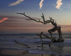 Driftwood Beach Picture