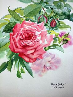 Ах эти розы... Художник - акварелист Ti Watercolor