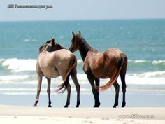 Лошадь - это красиво! (фотоподборка, 100 фото)
