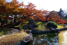 November is around the corner and that's usually the best time for autumn foliage in Kyoto, Osaka or Tokyo (esp. towards the end of Nov). :)  This photo was taken in Okayama's Korakuen Garden (November 2012).