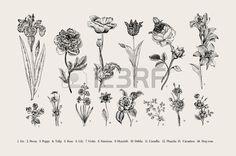 Botanique Banque D'Images