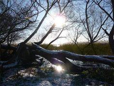 Winterurlaub: Das Achterwasser an der Halbinsel Gnitz bei Lütow.