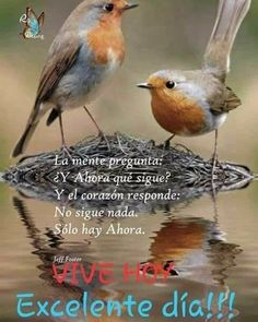 Morning Greetings Quotes, Good Morning Messages, Morning Quotes, Quotes En Espanol, Inspiration For Kids, Spanish Quotes, Albert Einstein, Kids And Parenting, Happy Day