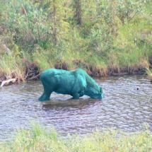 A rare Alaska Blue Moose, sorry that this is not a very good photo but this is an extremely rare animal - Pixdaus Very Rare Animals, Unique Animals, Animals Beautiful, Animals And Pets, Cute Animals, Wild Animals, Baby Animals, Funny Animals, Creepy Animals