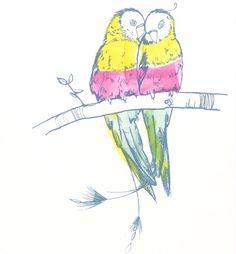 Parrot love ❤️