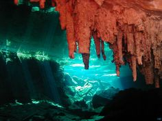 spectacular underwater view of a cenote in  Playa del Carmen, Mexico