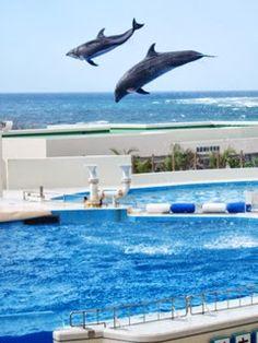 ものすごい跳躍力!「海洋博公園」のイルカショー