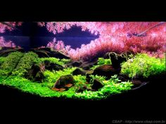 See more in the All Things Aquaria board: https://www.pinterest.com/JibinAbraham/all-things-aquaria/  https://www.facebook.com/MBredaAquapaisagismo/photos/a.146798705431642.28092.113045692140277/514190465359129/?type=1